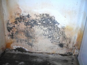 Water & Mold Damage-1