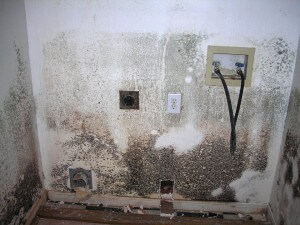 Water & Mold Damage-7
