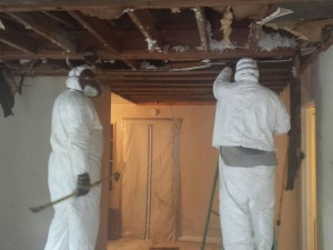 Mold Remediation-2