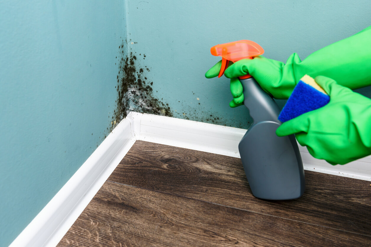 4 Mold Removal & Prevention Tips